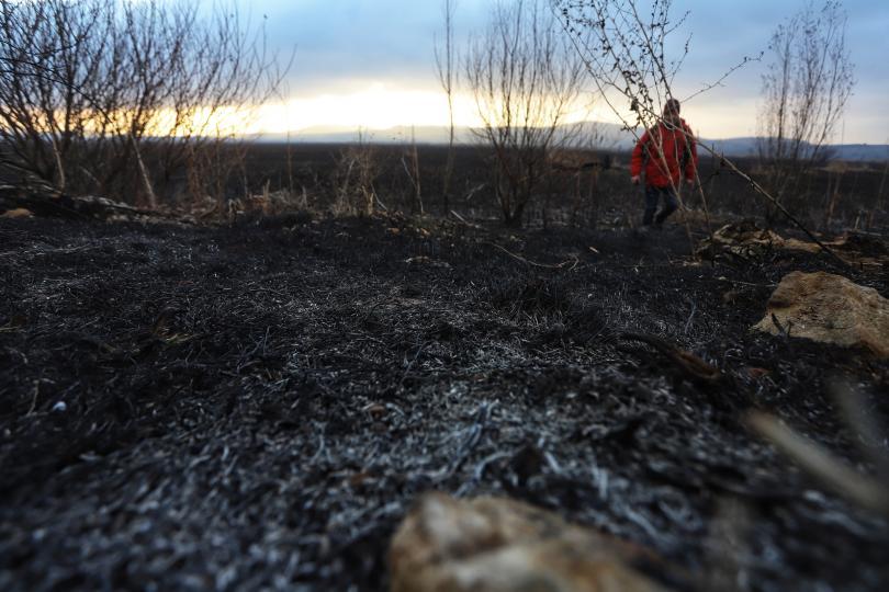 снимка 4 Потушен е пожарът, който обхвана част от Драгоманското блато (Снимки)