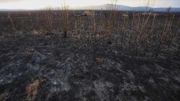 Потушен е пожарът, който обхвана част от Драгоманското блато (Снимки)