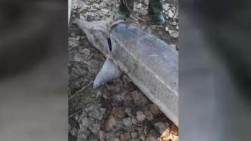 Задържаха бракониер с 200-килограмова моруна край село Айдемир