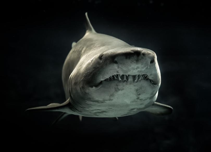Един човек почина вчера, след като бе нападнат от акула