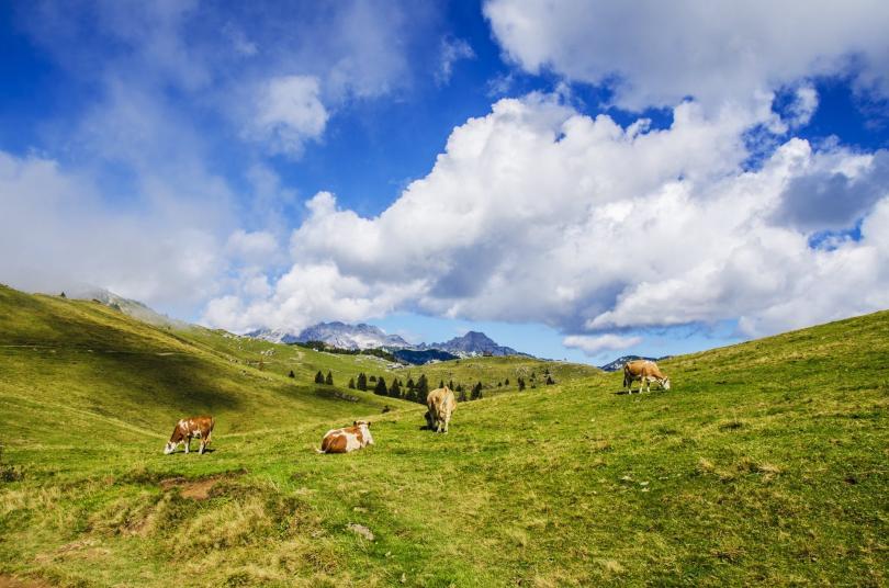 Австрия се гордее със своите зелени алпийски пасища, където планинарите