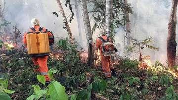Опустошителните пожари в горите на Амазония разпалиха политически страсти