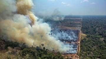 Леонардо ди Каприо дарява 5 милиона долара за спасяването на амазонските гори