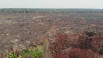 Болсонаро ще пропусне форум за Амазония заради операция