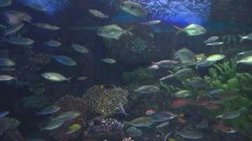 Тайните на най-големия аквариумен тунел в света
