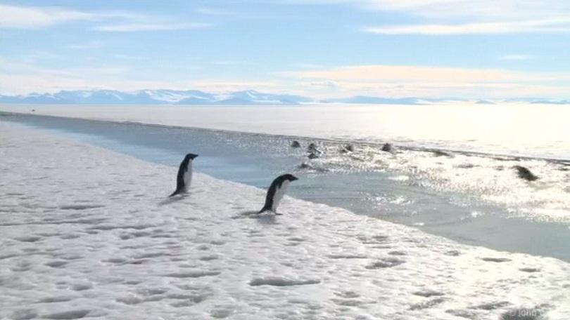 Снимка: Заминава втората група от Националната антарктическа експедиция