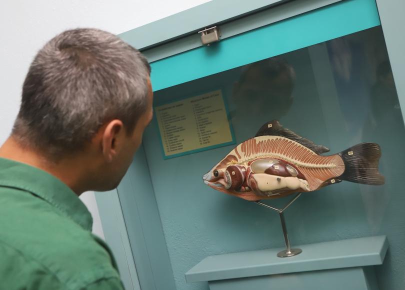 снимка 2 Смайваща адаптация на животните от Антарктида - изложба в Природонаучния музей