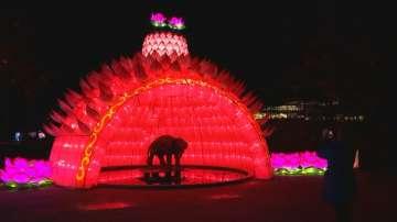 Китайски фенери огряха зоопарка в белгийския град Антверпен