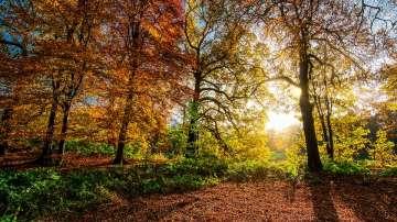 Слънчево време в по-голямата част от страната