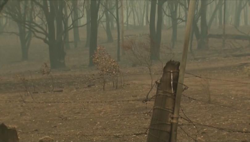 Жертвите на пожарите в Австралия вече са четири.Стихията бушува от
