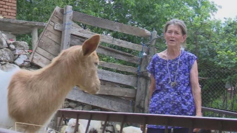снимка 1 Земеделският министър получи подкрепа от 26 животновъдски организации