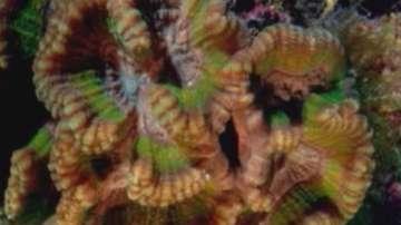 Големият бариерен риф струва 42 милиарда долара