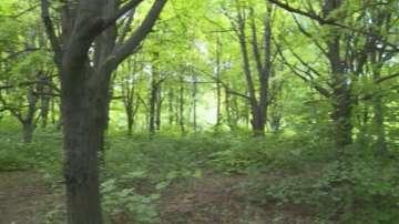 20 хиляди декара нови гори са засадени през миналата година