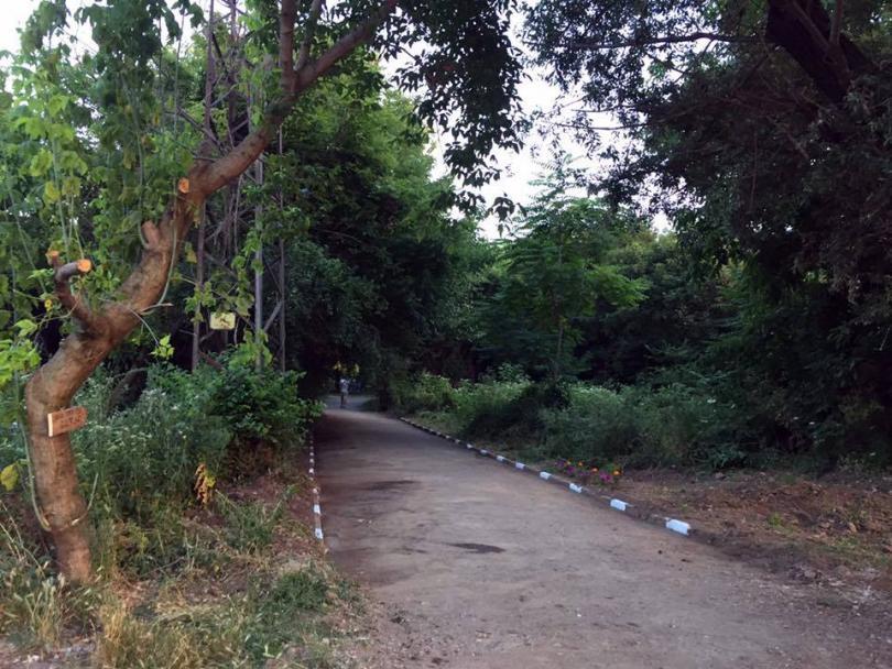 снимка 2 Защитниците на парк Бедечка почистиха алеите на парка (СНИМКИ)