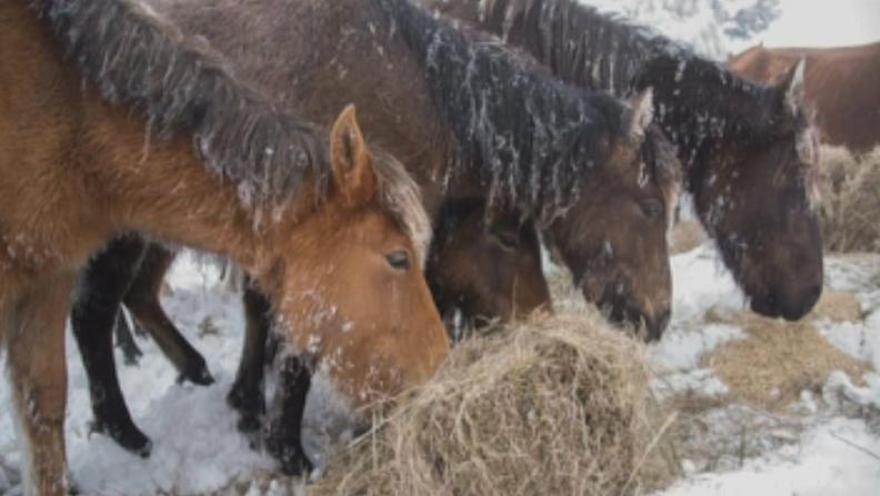 снимка 1 Арнаудова за конете в беда: Започваме разследване,ще търсим причините за смъртта