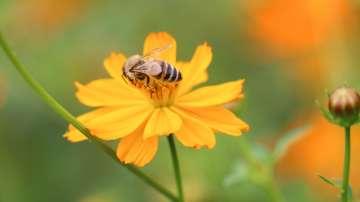Добрички пчелари предлагат как да се ограничи отравянето на пчели