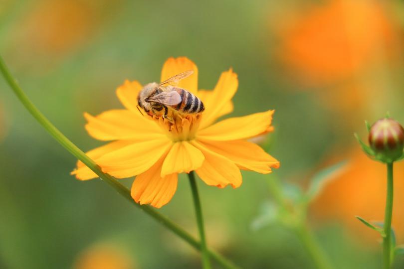 Европейската комисия даде защитено наименование на странджанския манов мед