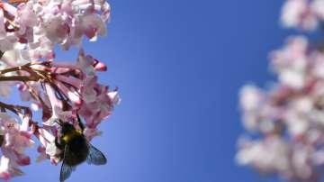 В Бавария правителството прие законодателни промени за защита на пчелите