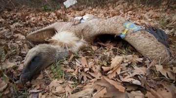МОСВ иска съдействие от МВР заради белоглавите лешояди в Кресна