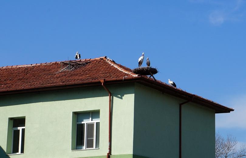 Първите 10 щъркела се върнаха в пловдивското село Белозем