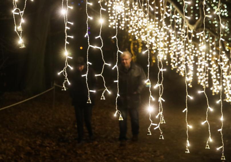 снимка 2 Ботаническата градина в Берлин грейна в коледни светлини (ГАЛЕРИЯ)