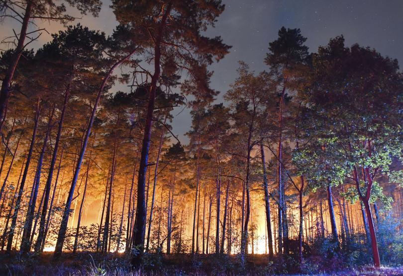 снимка 1  Голям пожар гори край Берлин, евакуирани са 600 жители от близките села
