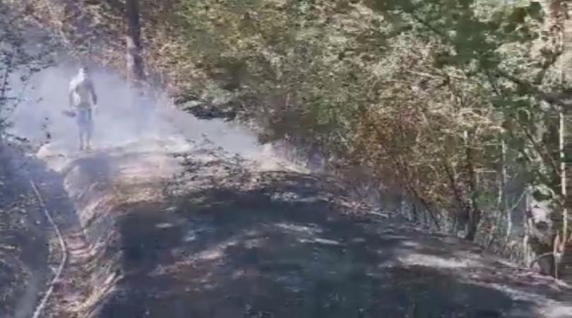 Снимка: Пожар гори до ЖП тунел край Дупница