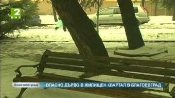 """Опасно дърво застрашава жители на квартал """"Запад"""" в Благоевград"""