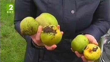50% от българските плодовете се продават на румънските пазари