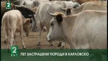Пет застрашени породи в Карловско