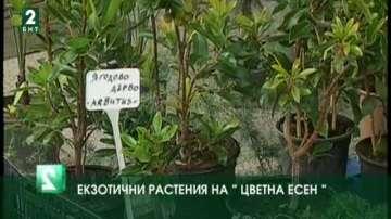 """Екзотични растения и съвети за цветята на """"Цветна есен"""" 2016"""