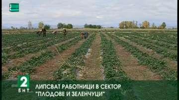 """Липсват работници в сектор """"Плодове и зеленчуци"""""""