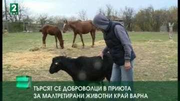 Търсят се доброволци в приюта за малтретирани животни край Варна