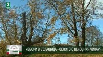 Избори в Белащица - селото с вековния чинар
