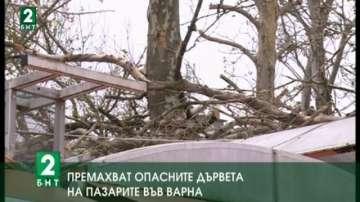 Премахват опасните дървета на пазарите във Варна