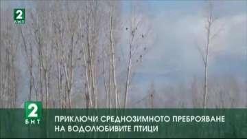 Приключи среднозимното преброяване на водолюбивите птици