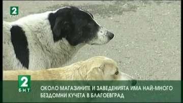 Около магазините и заведенията има най-много бездомни кучета в Благоевград