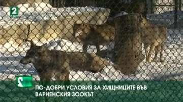 По-добри условия за хищниците във варненския зоокът