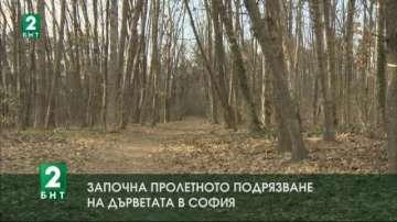 Започна пролетното подрязване на дърветата в София