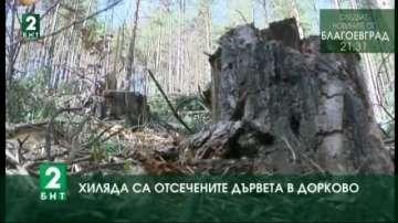 Над 1000 са незаконно отсечените дървета в гората край село Дорково