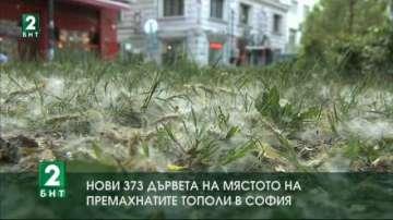 Нови 373 дървета на мястото на премахнатите тополи в София