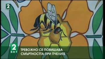 Отмененият мораториум върху род пестициди повишава смъртността на пчелите