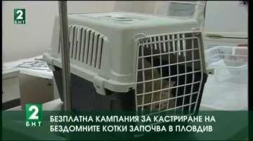 Безплатна кампания за кастриране на бездомните котки започва в Пловдив