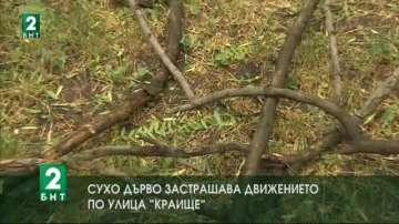 Сухо дърво застрашава движението по улица Краище