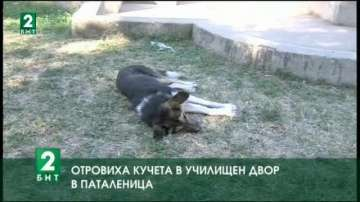 Отровиха кучета в училищен двор в Паталеница