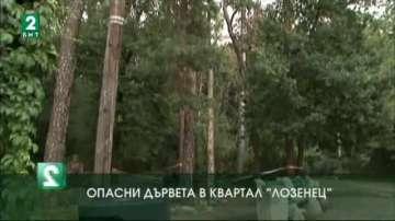 Опасни дървета в квартал Лозенец