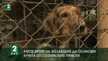 Расте броят на желаещите да осиновят кучета от софийските приюти