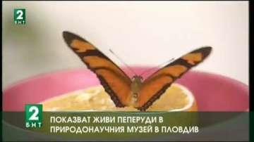 Показват живи пеперуди в Природонаучния музей в Пловдив