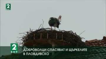 Доброволци спасяват и щъркелите в Пловдивско