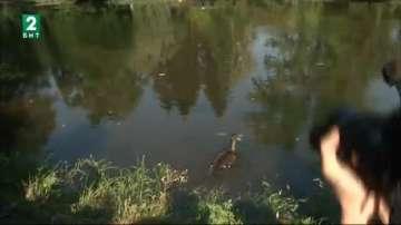 Новите обитатели на парк Врана